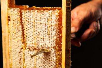 Fotoväggar - Honeycomb in a wooden frame
