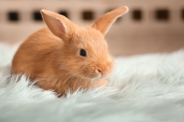 Cute fluffy bunny on floor at home