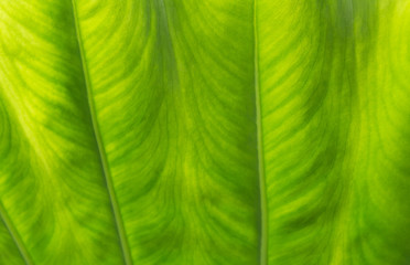 Green leaf macro. Green fresh plants close up for background