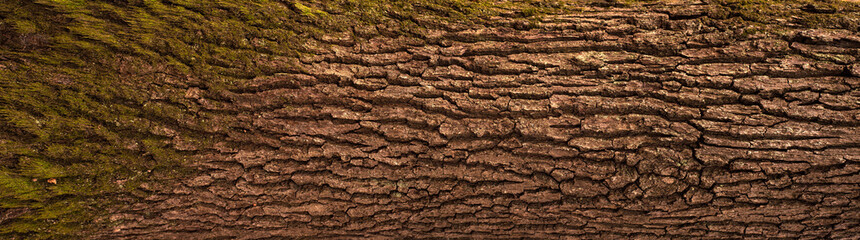 Embossed texture of the bark of oak. Panoramic photo of the oak texture. Fototapete