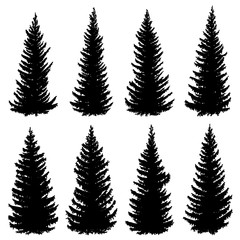 Silhouettes of old wild spruce trees (fir, fir-tree).