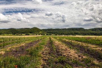 Beautiful rural scenery with agriculture cultivated field and pretty vivid cloudy sky