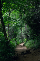 Mysterious road in green summer forest. Discover new trails. Explore the paths.