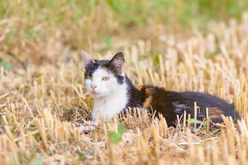 Eine Katze befindet sich in einem gemähten Feld