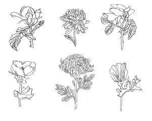 Set of different flowers - rose, chrysanthemum and poppy with leaves