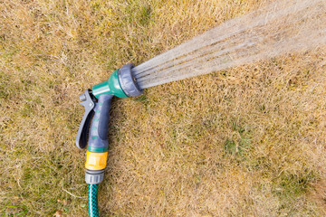 Hosepipe spraying water on parched and brown grass