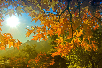Red maple leaf and yellow leaf  in the park in autumn season in Seoul, South Korea