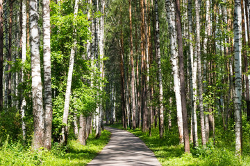 road in the summer forest