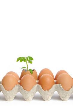 Eco-friendly eggs in box