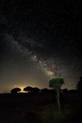 Milky Way over the forests near Santibañez el Bajo. Extremadura. Spain.