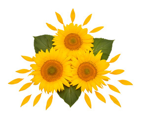 Flower arrangement sunflower bouquet with leaves and petals isolated on white background. Agriculture, farmer. Beautiful still life floral. Creative idea. Seeds and oil. Flat lay, top view