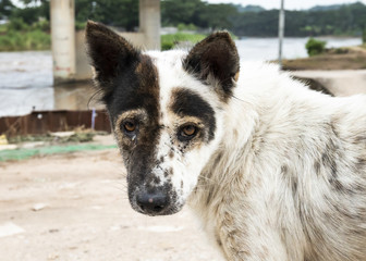 street dog with distinctive pattern on face