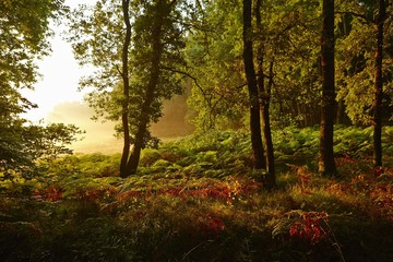 Forest clearing in the early morning light, Montagnac-la-Crempse, Bergerac, Departement Dordogne, Aquitaine, France, Europe