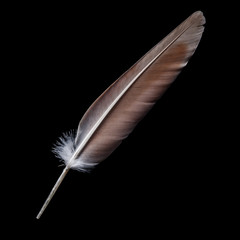 bird feather on a black background
