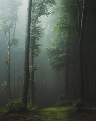 Aluminium Prints Dark grey Fairy tale trail in foggy forest. Fantasy spooky landscape in woodland