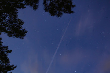 NIght sky with stars and tree silhouette and passenger plane trail
