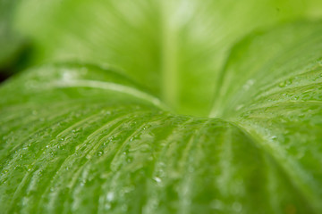 Horizontal water on green leaf background.