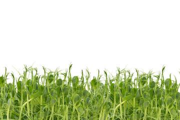 Fresh pea shoots on white background. isolated.