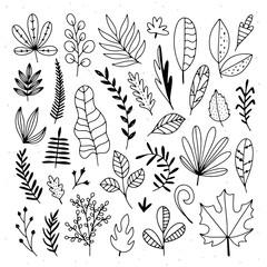 Hand drawn leaves illustration set. Plants and tree leaves botanical elements