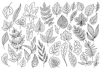 Big vector collection of different leaves, line drawings.