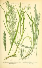 Foto op Plexiglas Draw Illustration of plant