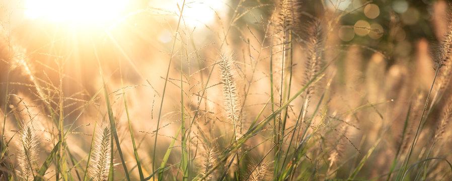 Grass field background