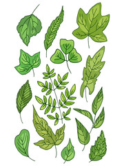 Color vector set of different fresh green leaves.