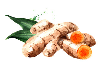 Fototapeta Turmeric root and green leaf. Watercolor hand drawn illustration, isolated on white background obraz