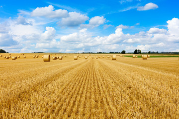 Foto op Plexiglas Platteland Yellow golden straw bales of hay in the stubble field, agricultural field under a blue sky with clouds