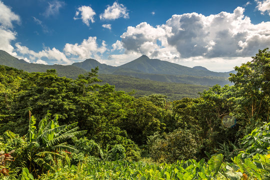Lush green outdoors in Dominica, Caribbean