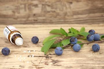 Naturheilpflanze Schlehdorn mit den aus ihr gewonnenen Globuli Prunus spinosa