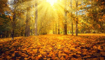Autumn landscape. Fall scene.