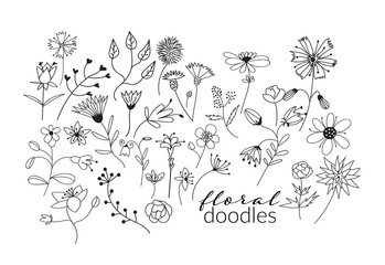 collection of botanical hand drawn doodles. meadow plants and flowers elements. pencil ink sketch of flowers and leaves