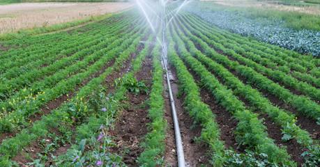 Bewässerung im Hitzesommer - Heisse Temperaturen in der Landwirtschaft