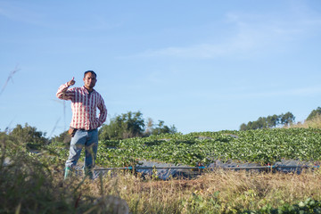 Man working in a garden of strawberries.