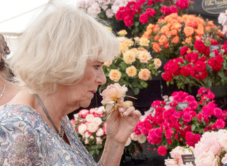 Britain's Camilla, The Duchess of Cornwall, visits the Sandringham Flower Show at Sandringham House, Norfolk