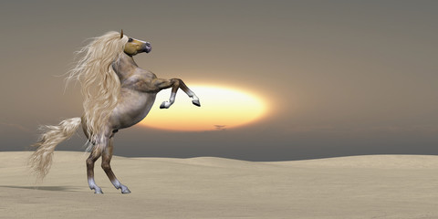Sand Dune Palomino Horse - The sun sets on a golden Palomino wild stallion showing his power and vitality in a desert landscape.