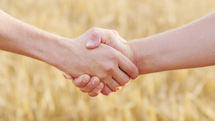 Male handshake of two farmers against the background of a yellow wheat field