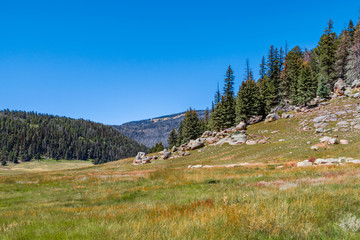 Valles Caldera National Preserve Meadow and Trees