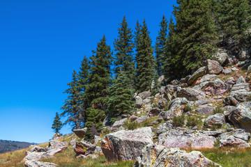 Pine Trees on Boulders at Valles Caldera National Preserve