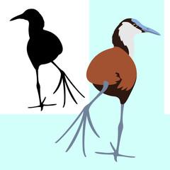 bird jacana african vector illustration flat style