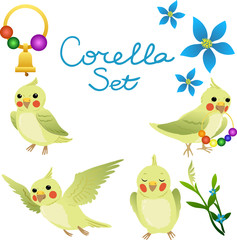 Corella perrots set