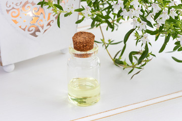 A bottle of mountain savory essential oil with fresh Satureja montana