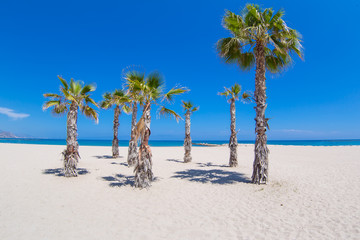 Hiszpania Costa Blanca Palmy Raj