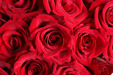 Beautiful red rose flowers as background, closeup