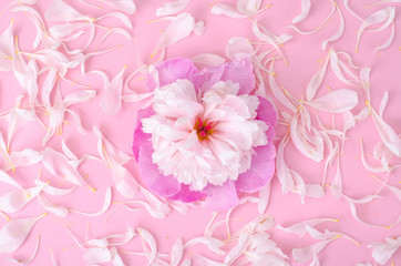 Creative layout of flower and petals