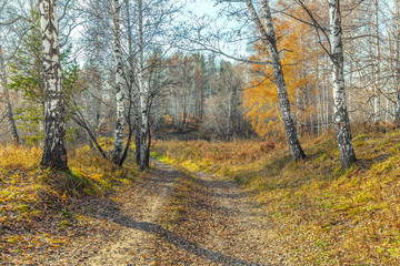 Late autumn in the Siberian forest.