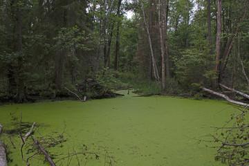 Natural landscape - forest bog