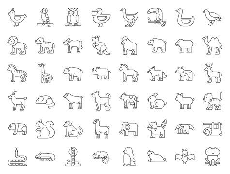 Big set of safari, arctic, forest, zoo animal and bird such as tiger, seal, camel, sloth, kangaroo, frog, pelican, parrot, toucan icon, thin line