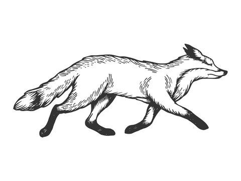 Running fox animal engraving vector illustration